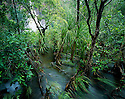 Australia, Northern Territory, Litchfield National Park, Flooded forest at Wangi Falls in rainy season, water flowing through lush vegetation