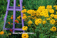 63821-17706 Purple Obelisk with Mexican Flame Vine (Senecio confusus) &  Double Gloriosa Daisy (Rudbeckia hirta 'Tetraploid'  IL