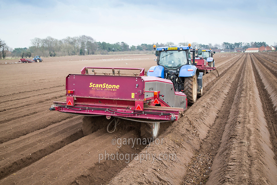 Destoning for potatoes - Norfolk, February