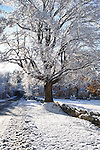 A maple tree along the roadside covered with snow after an early snow storm