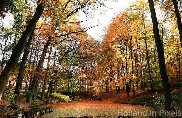 Nederland Arnhem 2015.  Herfst in Gelderland.  Foto Berlinda van Dam / Nederlandse Hoogte