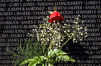 A reed rose leaning against the black granit wall with the names of the fallen in Vietnam