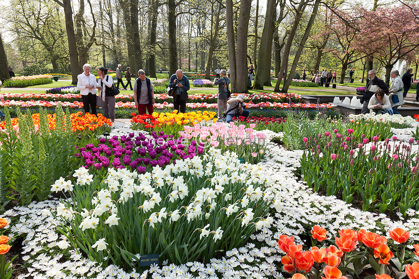 "Hollande, région des champs de fleurs, Lisse, Keukenhof, massif avec tulipes, narcisses, anémone blanda // Holland, ""Dune and Bulb Region"" in April, Lisse, Keukenhof, flowerbed with tulips, daffodils, Anemone blanda ((Grecian Windflower) and visitors."