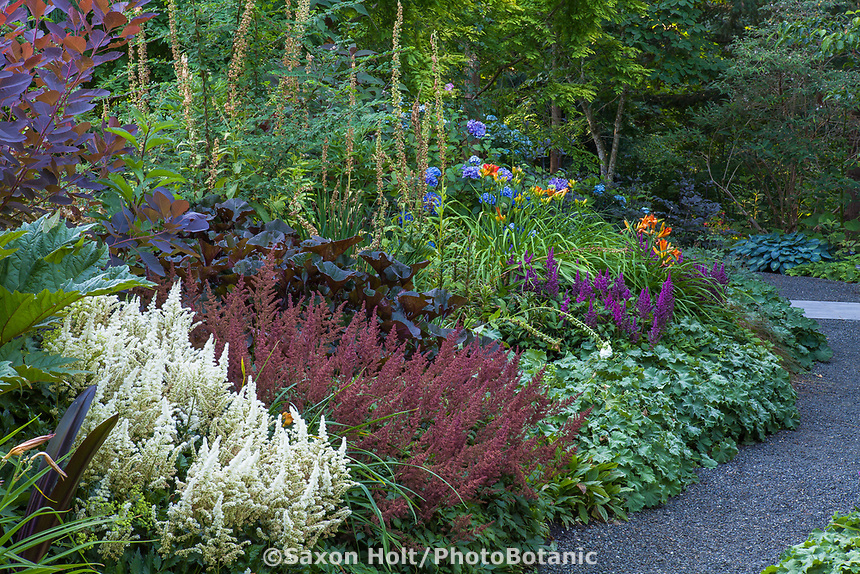Astilbe chinensis 'Vision in White' and 'Vision in Red' Chinese Astilbe flowering in well designed, layered perennial border at Bellevue Botanical Garden