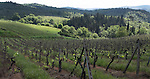 Part of the Casa Sola vineyards in the Chianti Classico zone of Tuscany.