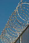 Circular barbed wire on top of a metal wire fence