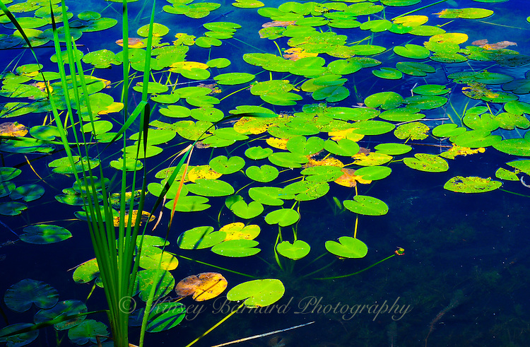 """SYMPHONY IN BLUE & GREEN""<br />