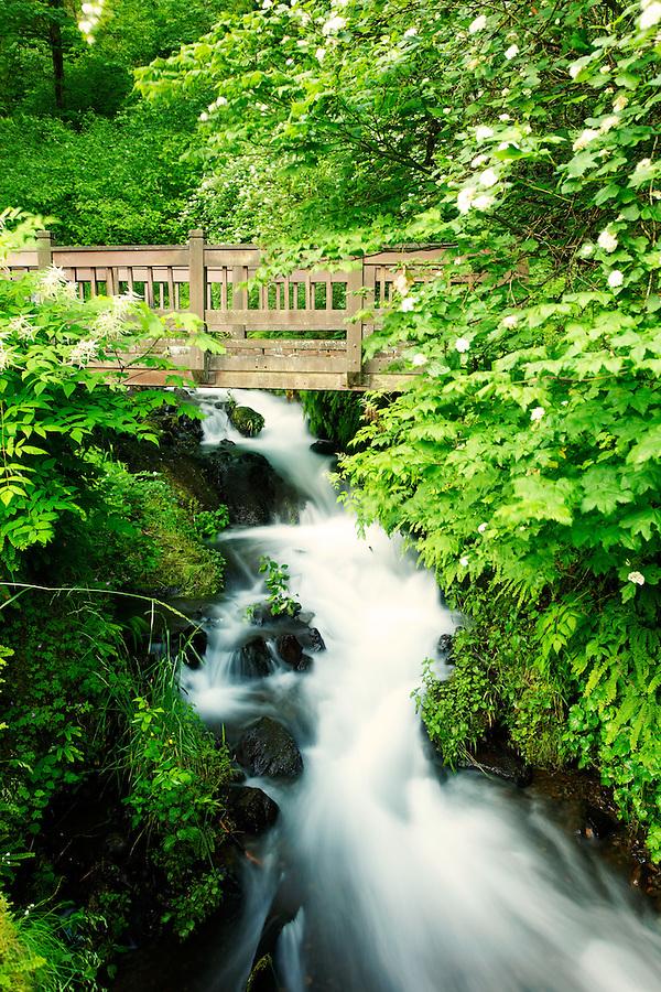 Bridge over Waheena Creek, Columbia River Gorge National Scenic Area, Oregon, USA