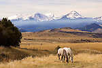 Beaverhead National Forest, Oct first snow, horses, blue mountains, snow capped,
