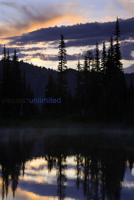 Dusk on Reflection Lake, Lodgepole Pine forest, Mt. Rainier National Park, Washington, USA
