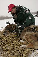 Veterinarian Caroline Griffits checks a dog from Jeff Kiing's team at the Nikolai checkpoint