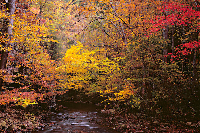 Autumn color on Beaver Dam Creek, Cherokee National Forest