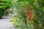 Casa Orquidea Botanical Gardens, Costa Rica, Central America