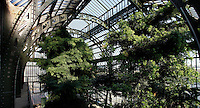 Plant History Glasshouse (formerly Australian Glasshouse), 1830s, Rohault de Fleury, Jardin des Plantes, Museum National d'Histoire Naturelle, Paris, France. High angle panoramic view of the interior of the glasshouse showing the glass and metal structure and the luxuriant Tropical vegetation lit by the afternoon sun. At the far end a Podocarpus Elongata plant from South West Africa is growing.