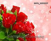 Alfredo, FLOWERS, BLUMEN, FLORES,  photos+++++,BRTOXX05257,#F#