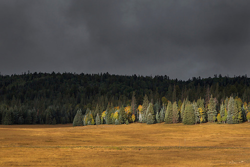 Autumn colors have arrived  along the forests and meadows at Grand Canyon National Park, Arizona