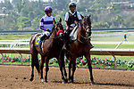 DEL MAR, CA  AUGUST 4:  #6 Carnivorous, ridden by Mario Gutierrez, in the post parade before the Graduation Stakes  in the stretch on August 4, 2018 at Del Mar Thoroughbred Club in Del Mar, CA. (Photo by Casey Phillips/Eclipse Sportswire/ Getty Images)