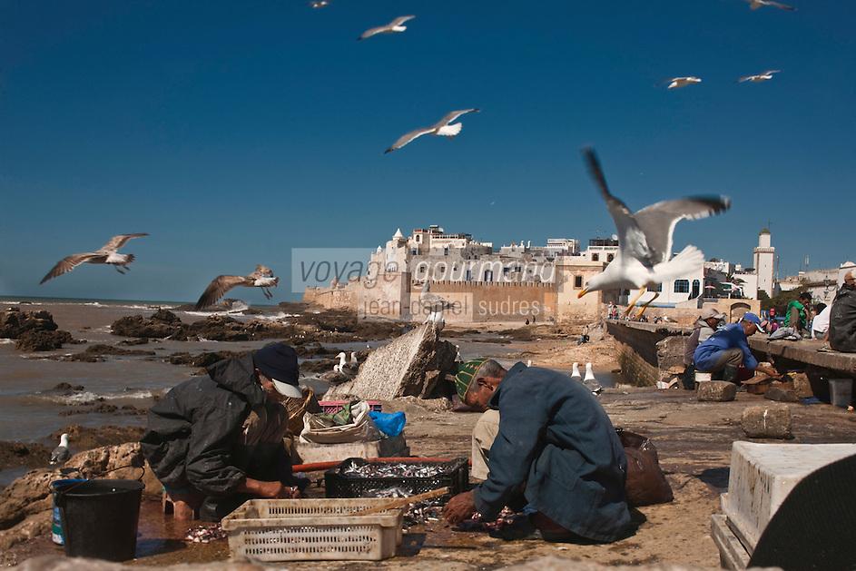 Afrique/Afrique du Nord/Maroc/Essaouira:  Les pêcheurs  nettoient leur poissons au retour de pêche, en fond et la médina et ses remparts