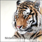 Sandi, REALISTIC ANIMALS, REALISTISCHE TIERE, ANIMALES REALISTICOS, paintings+++++tigherportrait1,USSN95,#a#, EVERYDAY ,tiger,tigers, ,puzzles