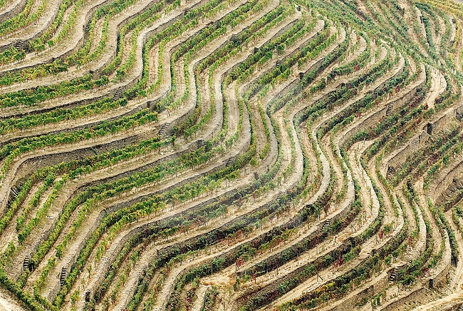 vineyards in Douro, Portugal