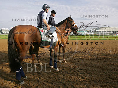 Barbaro (Dynaformer - La Ville Rouge), owned by Gretchen and Roy Jackson's Lael Stables, at Churchill Downs in May 2006 for the Kentucky Derby
