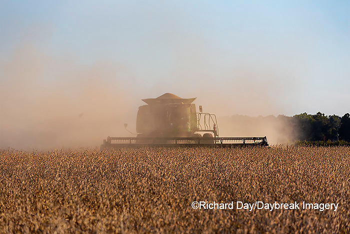 63801-13206 Harvesting soybeans in fall  Marion Co. IL