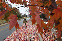NWA Democrat-Gazette/J.T.WAMPLER Jose Luis Landivar of Fayetteville walks along Leverette Ave. Wednesday Nov. 6, 2019 past a maple tree in full autumn color on his way to class at the University of Arkansas. The National Weather Service is calling for partly cloudy skies the rest of this week with overnight lows in the 40s.