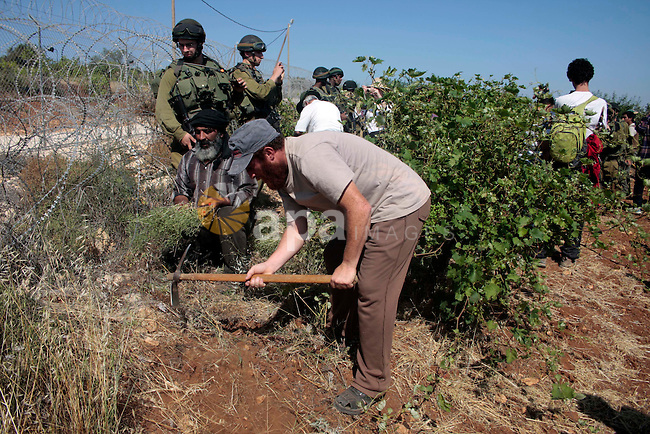 Israeli soldiers stand guards as protesters help a Palestinian farmer in his land on Jun 24, 2011 during a demonstration by foreign, Israeli and Palestinian activists against the Jewish settlement of Karmei Tzur near the Palestinian village of Beit Omar, in the southern West Bank. Photo by Najeh Hashlamoun