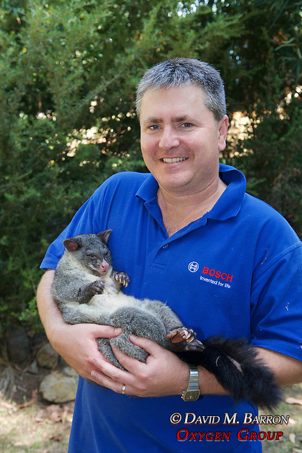 Kevin Schroder Holding Mountain Brushtail Possum
