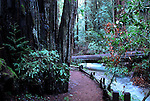 Trail and creek at Armstrong Redwoods State Reserve