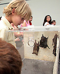 "Brayden Teachout, 6, looks at bats during the NorCal Bats presentation at the Carson City Library on Saturday afternoon. The event was part of the Summer Reading Program, ""Dream Big, Read!"".Photo by Cathleen Allison"
