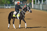 Black Onyx, trained by Kelly Breen, during morning workouts for the Kentucky Derby at Churchill Downs in Louisville, Kentucky on April 30, 2013.