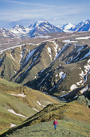 Hiking on tundra, above Sable Pass area of Denali National Park, Alaska, AGPix_0212.