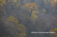 65045-01114 Trees in fall, Ozark National Scenic Riverway near Akers Ferry, MO
