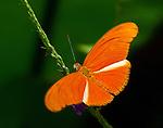 Butterflies-Skippers-Moths-Dragonflies
