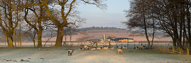 Thameside farm in the winter dawn light, Streatley on Thames, Oxfordshire