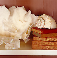 Detail of a large shell sitting on top of a pile of leather bound books beside a large piece of coral.