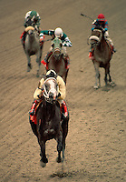Arabian race horses thunder down the stretch with one way out in the lead. Shot from head on. Horse race, horse racing, equine, speed, competition. #539 RaceV head On.