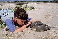 1Y47-328x  Horseshoe Crab - boy examining horseshoe crab -  Limulus polyphemus