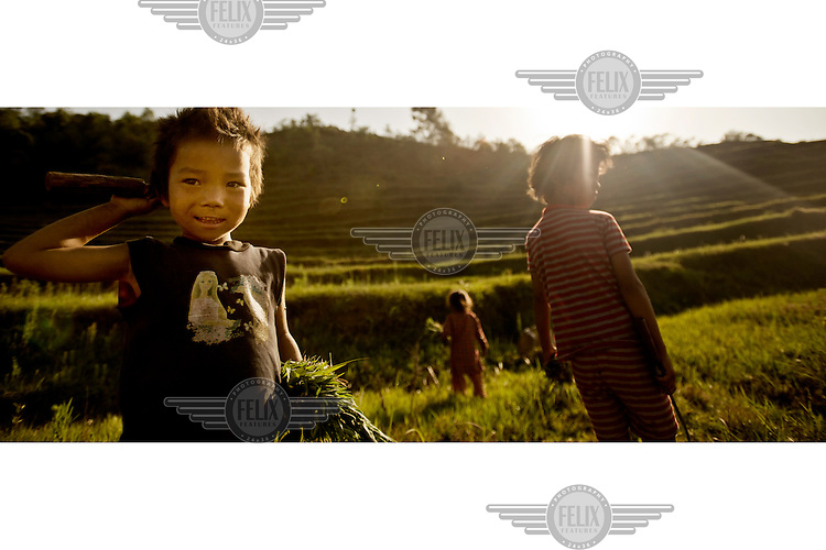 Children help harvest a rice crop.