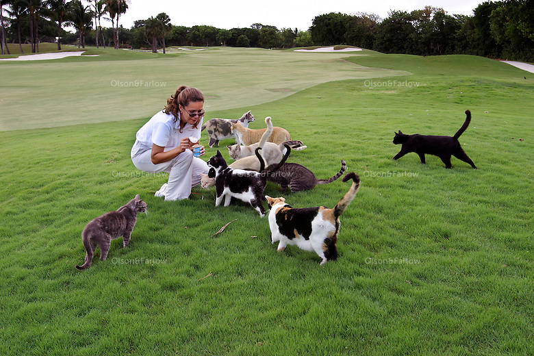 Kitties flock to a golf course feeding at Ocean Reef, a private community.  When the decision is made to fight an invasive species, the methods can be ruthless: widespread slayings, mass poisonings, relentless uprootings. But the only thing these feral cats are in danger of is being killed by kindness. In the community on Key Largo, Florida, three volunteers--including Susan Hershey, care for the area's feral cats, making sure the animals are spayed or neutered as well as fed. In ten years this program has cut the population from a high of some 2,000 cats down to about 500.