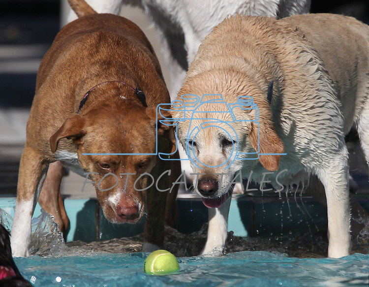 Sara and Jazmine reach for a ball at the third annual Pooch Plunge at the Carson Aquatic Facility in Carson City, Nev., on Saturday, Sept. 17, 2011. The event, which raises money for Parks 4 Paws, continues Sunday with sessions at 9 a.m., 11 a.m. and 1 p.m..Photo by Cathleen Allison