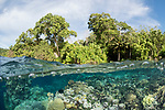 Russell Islands, Solomon Islands; trees, blue sky and clouds are visible above the water, while a shallow coral reef is seen under the surface on a over-under, split shot near the shore