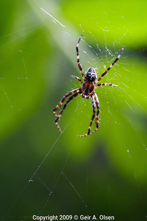 Small spider in its web
