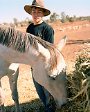 AUSTRALIA, Rawnsley Park Station, the Outback, young man looking at horse grazing