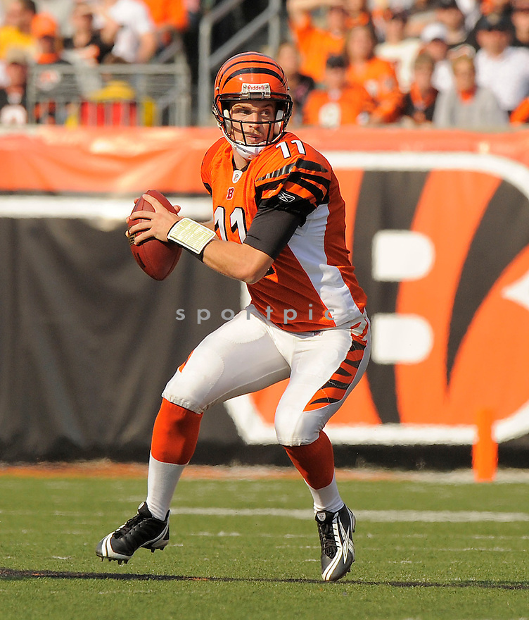 RYAN FITZPATRICK, of the Cincinnati Bengals, in action against the Jacksonville Jaguars during the Bengals game in Cincinnati, OH on Novmeber 12, 2008. ..Bengals win 21-19