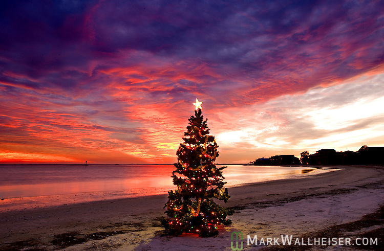 Christmas on the beach at Shell Point, Florida near the Florida Panhandle town of Crawfordville.