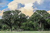 Alamos en un dia nublado. nubes. nube. <br /> Aspectos del municipio de Nacozari Sonora y sus Alrededores. Carretera  a Esqueda Sonora, Fronteras Sonora en la primavera. <br /> ** &copy; Foto:LuisGutierrez/NortePhoto.com