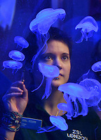Moon Jellyfish at London Zoo stocktake<br /> Annual stocktake of every creature in the zoo, spanning 850 species, postponed from January after a fire in just before Christmas last year, in which a number of animals died, at London Zoo <br /> London Zoo Stocktake photocall, London, England on February 07, 2018.<br /> CAP/JOR<br /> &copy;JOR/Capital Pictures