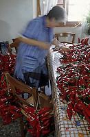 Europe/France/Aquitaine/64/Pyrénées-Atlantiques/Espelette: Les femmes trient et enfilent les piments d'Espelette sur un fil pour les faire sécher [Non destiné à un usage publicitaire - Not intended for an advertising use]